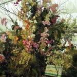 Medzinarodna_vystava_orchidei_2014