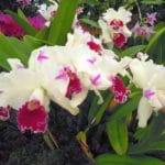 Medzinarodna_vystava_orchidei_6