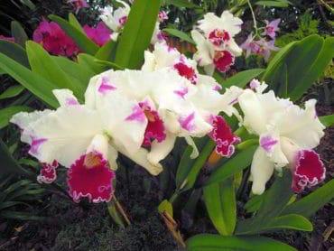 Medzinárodná výstava orchideí vo Viedni