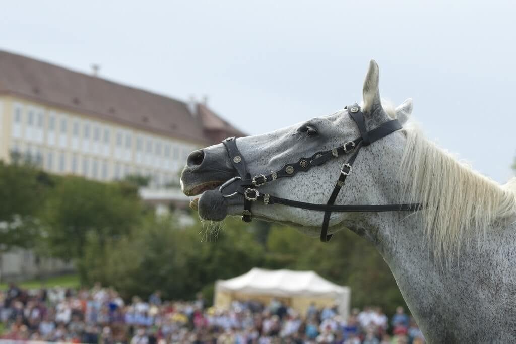 01Pferdefest Schloss Hof_c_Jutta Kirchner