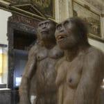 Naturhistorisches_Museum_Wien_21