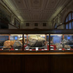 Naturhistorisches_Museum_Wien_25