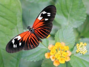 Motýlia krása uprostred Viedne