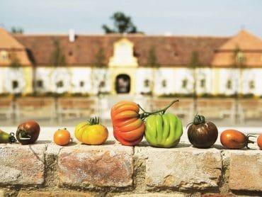 Slávnosť keramiky na zámku Schloss Hof