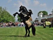 Veľká slávnosť koní na zámku Schloss Hof
