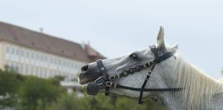 Velka slavnost koni Schlosshof